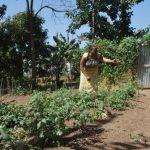 Promozione economia locale con nuove varietà di verdure