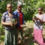 I prodotti dell'orticoltura di Lera