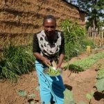 La produzione di fagiolini è una novità nel villaggio di Lera